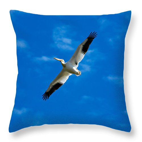 American Throw Pillow featuring the photograph American White Pelican by Marilyn Hunt
