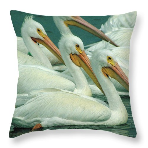White Pelicans Throw Pillow featuring the photograph American White Pelicans by Bruce Morrison