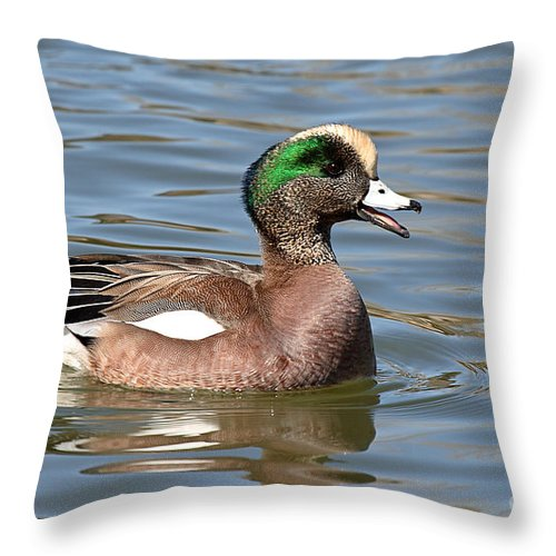 Widgeon Throw Pillow featuring the photograph American Widgeon Calling From The Water by Max Allen