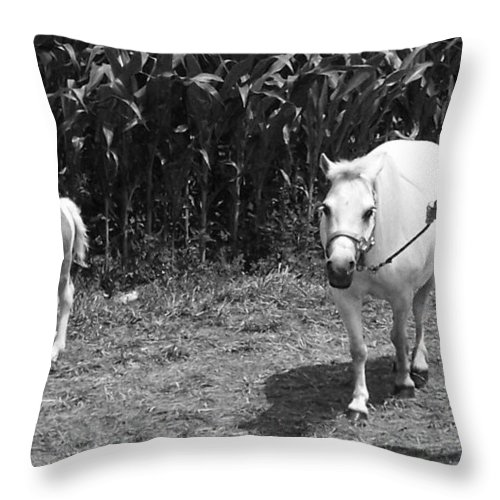 Amish Girl With Her Colt Throw Pillow featuring the photograph Amish Girl With Her Colt by Eric Schiabor