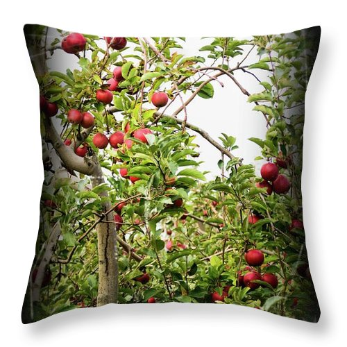 Apple Tree Throw Pillow featuring the photograph An Old Apple Tree by Randy J Heath
