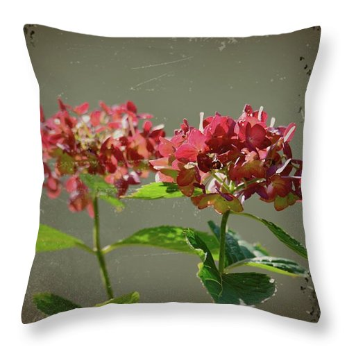 Antique Picture Of Flowers Throw Pillow featuring the photograph An Old Picture by Randy J Heath