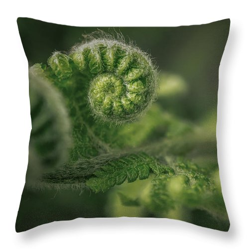 Nature Throw Pillow featuring the pyrography Ancient Forest by Hanna Tor