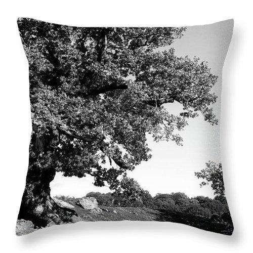 Woodland Throw Pillow featuring the photograph Ancient Oak, Bradgate Park by John Edwards