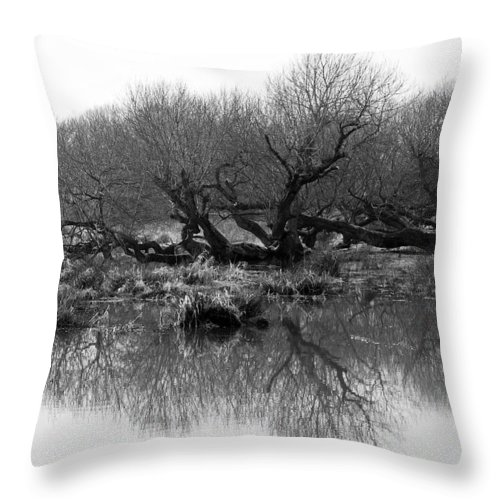Trees Throw Pillow featuring the photograph Ancient Pollard Trees by Bob Kemp