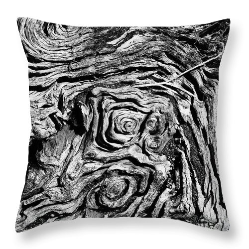 Tree Throw Pillow featuring the photograph Ancient Stump by Christopher Holmes