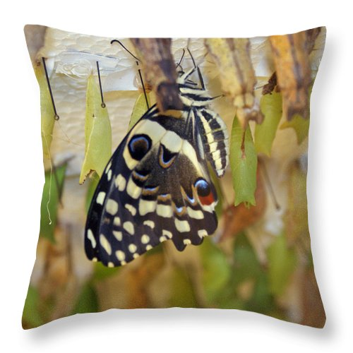 Butterfly Throw Pillow featuring the photograph And life begins by Shelley Jones