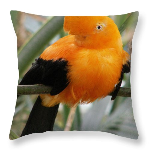 Bird Throw Pillow featuring the photograph Andean Cock Of The Rock by Amy Fose