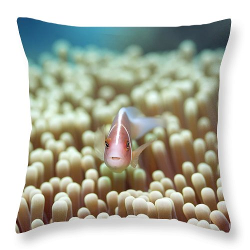 Clown-fish Throw Pillow featuring the photograph Anemone And Pink Clownfish by MotHaiBaPhoto Prints