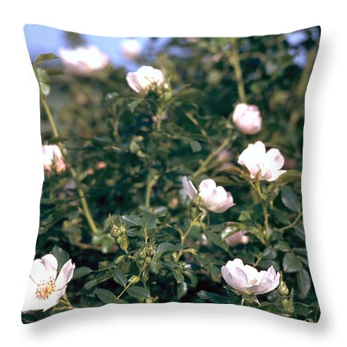 Anemone Throw Pillow featuring the photograph Anemone by Flavia Westerwelle