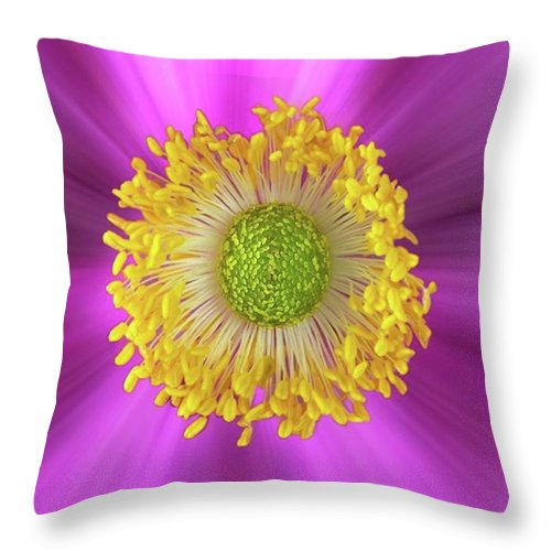 Beautiful Throw Pillow featuring the photograph Anemone Hupehensis 'hadspen by John Edwards