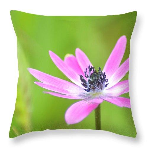 Natura Throw Pillow featuring the photograph Anemone Stellata by Orazio Puccio