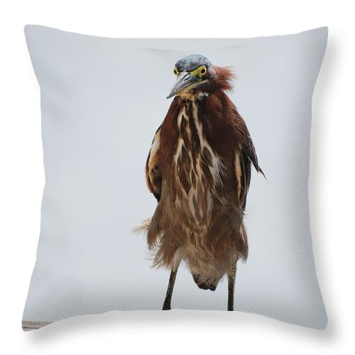 Birds Throw Pillow featuring the photograph Angry Bird by Rob Hans