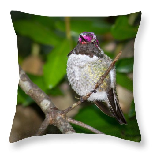Anna's Hummingbird Throw Pillow featuring the photograph Anna's Hummingbird by Kristina Rinell