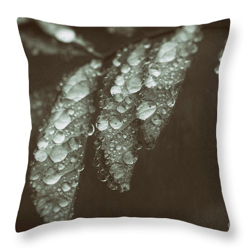 Leaf Throw Pillow featuring the photograph Annointed by C L Lassila