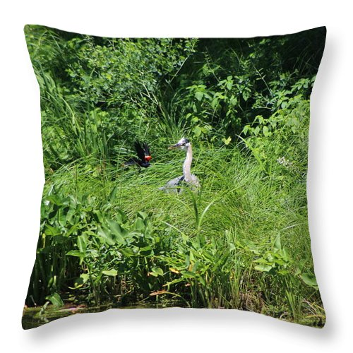 Marsh Throw Pillow featuring the photograph Annoyed - Heron and Red Winged Blackbird 5 of 10 by Colleen Cornelius