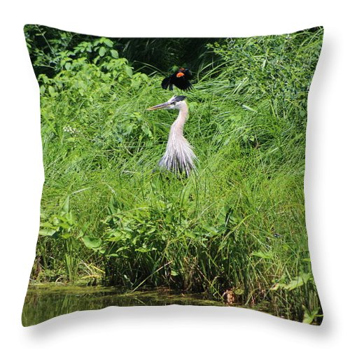 """Annoyed - Heron And Red Winged Blackbird 1 Of 10"" Photograph on Throw Pillow"