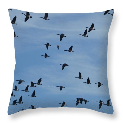Geese Throw Pillow featuring the photograph Anomaly by Peggy King