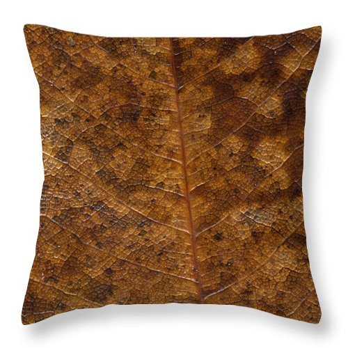 Nature Throw Pillow featuring the photograph Another Touch Of Fall by Richard Rizzo