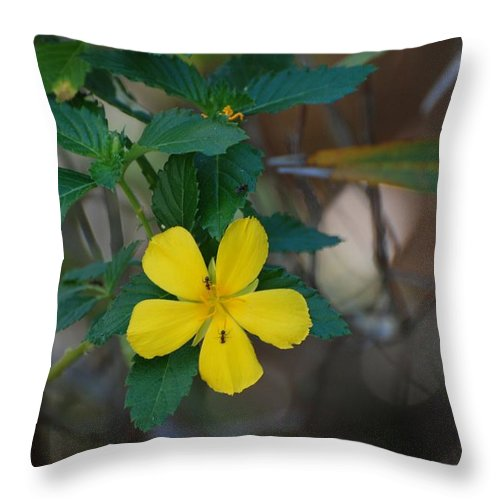 Macro Throw Pillow featuring the photograph Ant Flowers by Rob Hans