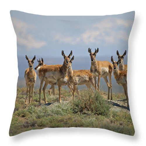Antelope Throw Pillow featuring the photograph Antelope by Heather Coen