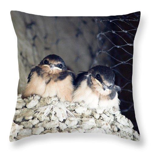 Birds Throw Pillow featuring the photograph Antelope Island Birds by Linda Dunn
