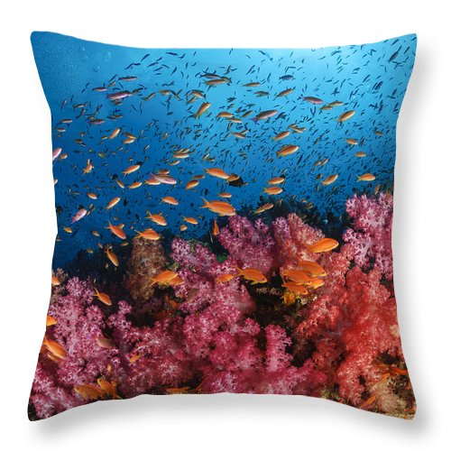 Animals In The Wild Throw Pillow featuring the photograph Anthias Fish And Soft Corals, Fiji by Todd Winner