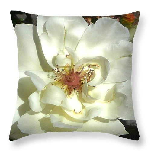 Rose Throw Pillow featuring the photograph Antique Rose by Lori Seaman