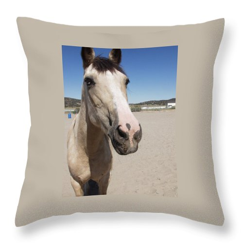 Horses Throw Pillow featuring the photograph Any Carrots by Jamey Balester