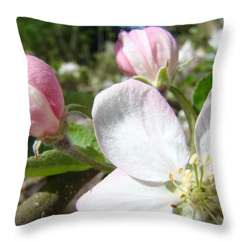 Apple Throw Pillow featuring the photograph Apple Blossom Artwork Spring Apple Tree Baslee Troutman by Baslee Troutman