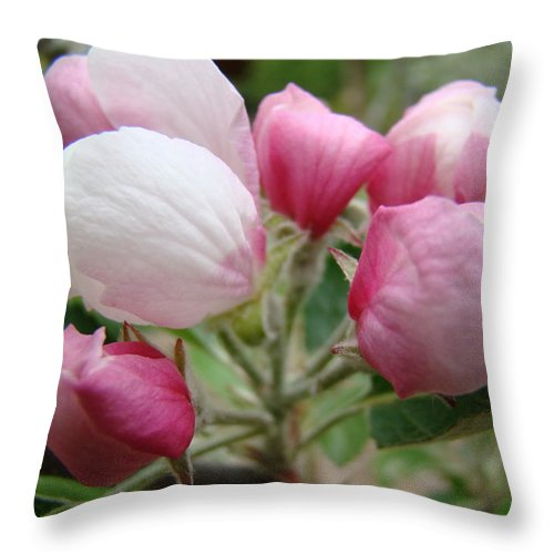Apple Throw Pillow featuring the photograph Apple Blossom Buds Art Prints Spring Blossoms Baslee Troutman by Baslee Troutman