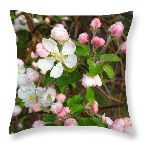 Blossoms Throw Pillow featuring the photograph Apple Blossom Pink by Peggy King