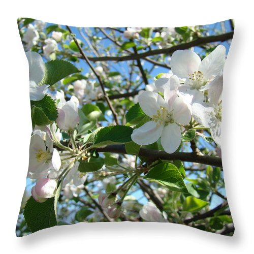 �blossoms Artwork� Throw Pillow featuring the photograph Apple Blossoms Art Prints 60 Spring Apple Tree Blossoms Blue Sky Landscape by Baslee Troutman