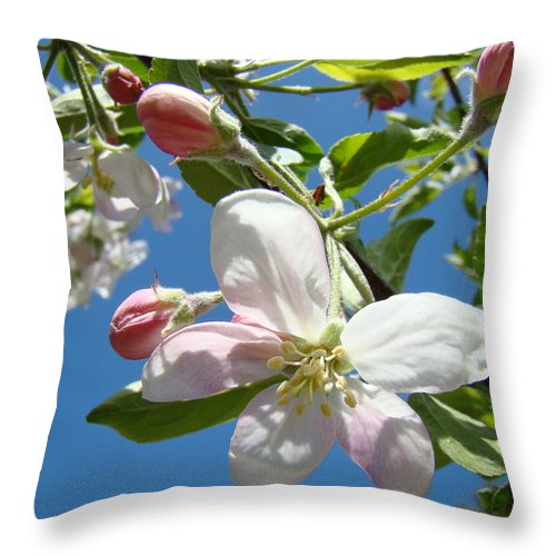 Apple Throw Pillow featuring the photograph Apple Blossoms Art Prints Blue Sky Spring Baslee Troutman by Baslee Troutman