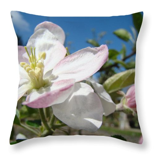 Apple Throw Pillow featuring the photograph Apple Blossoms Art Prints Canvas Blue Sky Pink White Blossoms by Baslee Troutman