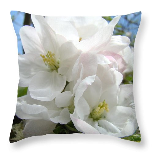 �blossoms Artwork� Throw Pillow featuring the photograph Apple Blossoms Art Prints Giclee 48 Spring Apple Tree Blossoms Blue Sky Macro Flowers by Baslee Troutman