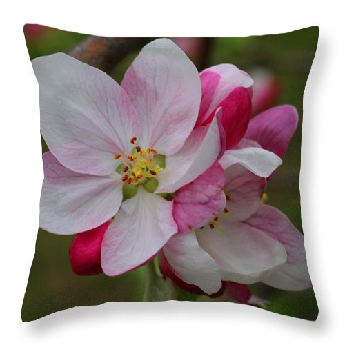 Apple Blossoms Throw Pillow featuring the photograph Apple Blossoms by Kathryn Meyer