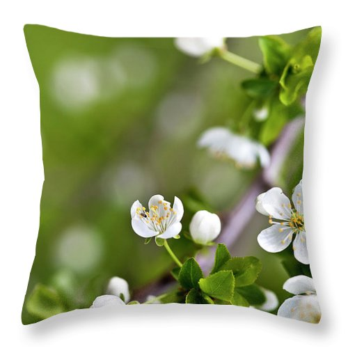 Apple Throw Pillow featuring the photograph Apple Blossoms by Nailia Schwarz