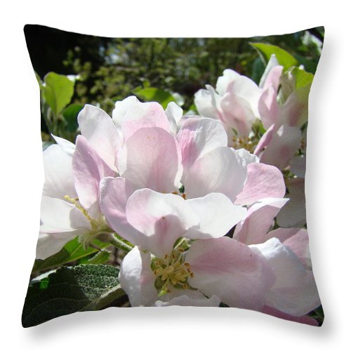 Apple Throw Pillow featuring the photograph Apple Tree Blossoms Art Prints Baslee Troutman by Baslee Troutman