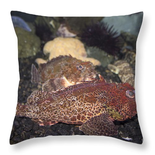 Fish Throw Pillow featuring the photograph Aquarium Fish by Steven Parker