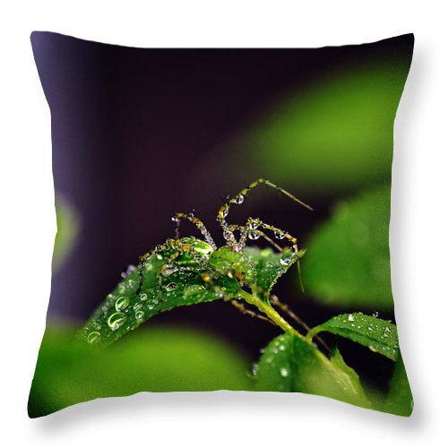 Clay Throw Pillow featuring the photograph Arachnishower by Clayton Bruster