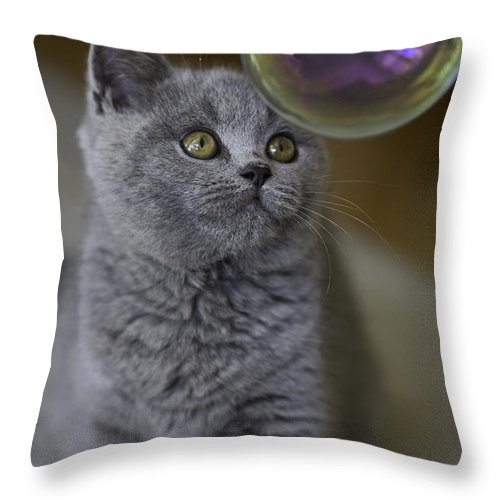 Cat Throw Pillow featuring the photograph Archie With Bubble by Sheila Smart Fine Art Photography