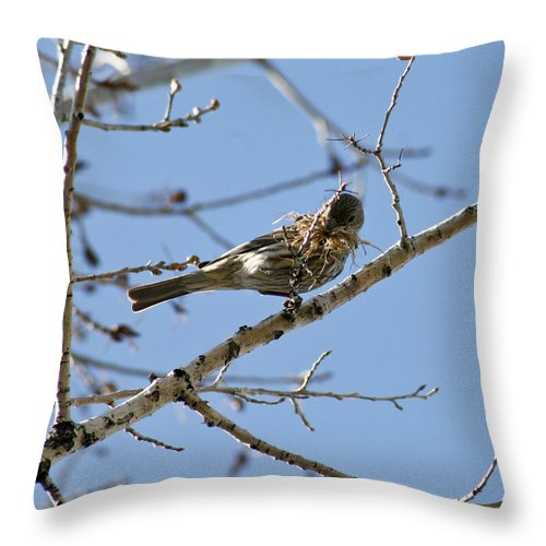 Bird Throw Pillow featuring the photograph Architect by Marilyn Hunt
