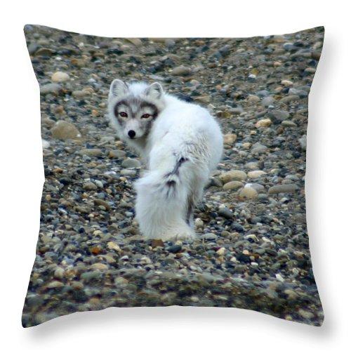 Alaska Throw Pillow featuring the photograph Arctic Fox by Anthony Jones