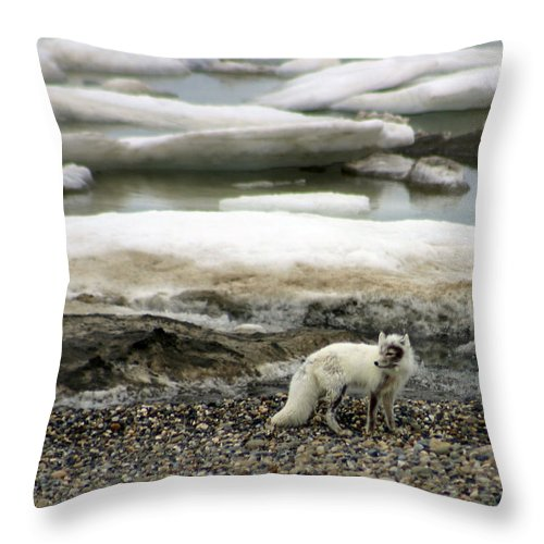 Fox Throw Pillow featuring the photograph Arctic Fox By Frozen Ocean by Anthony Jones