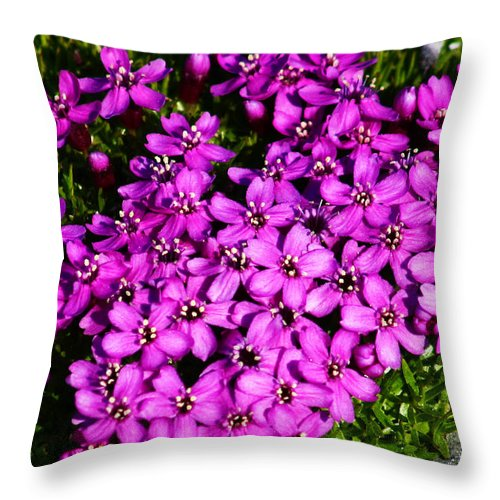 Arctic Throw Pillow featuring the photograph Arctic Wild Flowers by Anthony Jones