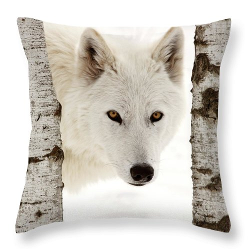 Arctic Wolf Throw Pillow featuring the digital art Arctic Wolf Seen Between Two Trees In Winter by Mark Duffy
