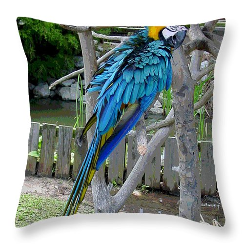 Blue Throw Pillow featuring the photograph Arent I a Handsome Fellow - Blue and Gold Macaw by Suzanne Gaff