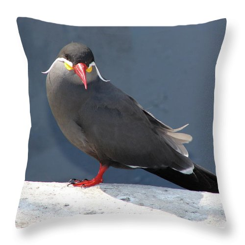 Arica Throw Pillow featuring the photograph Arica Chile Sea Bird by Brett Winn