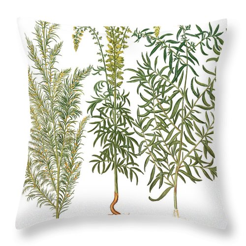 1613 Throw Pillow featuring the photograph Artemisiae & Reseda by Granger
